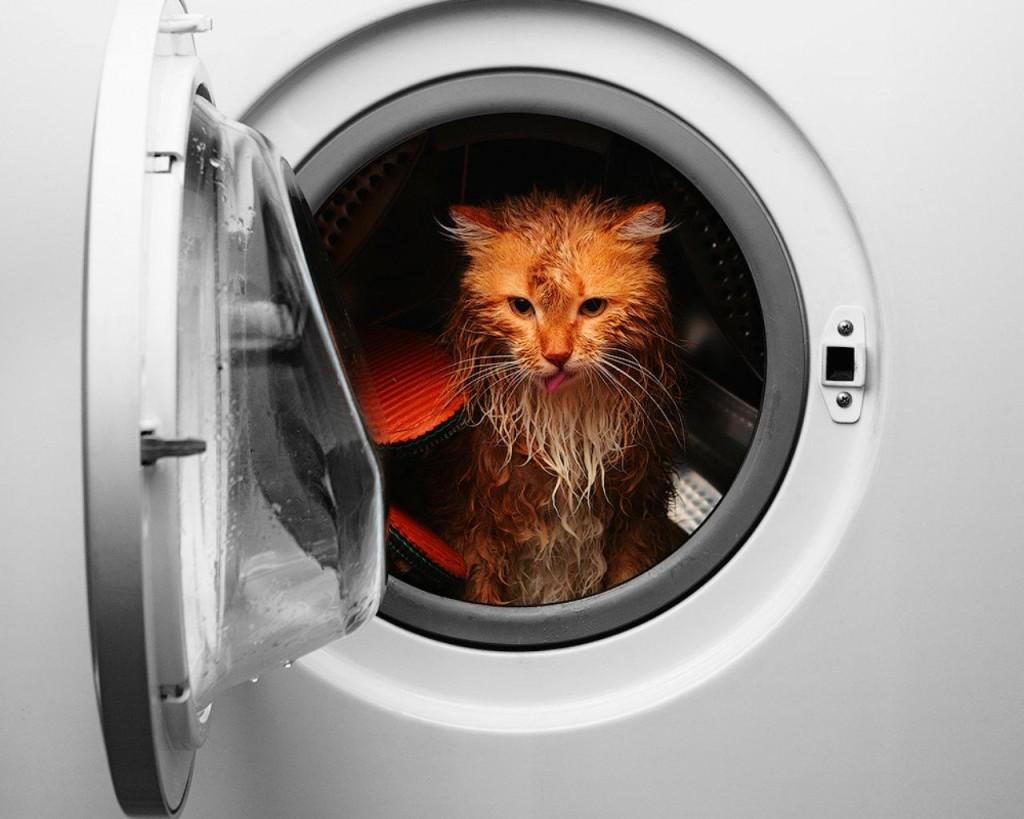Attenti a non mettere anche il gatto in lavatrice!