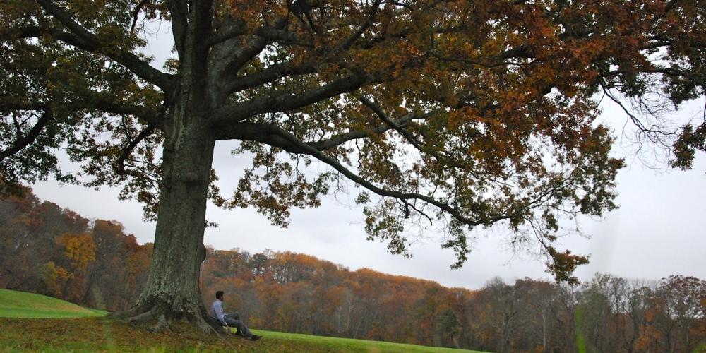5 libri per sognare all'ombra di un albero