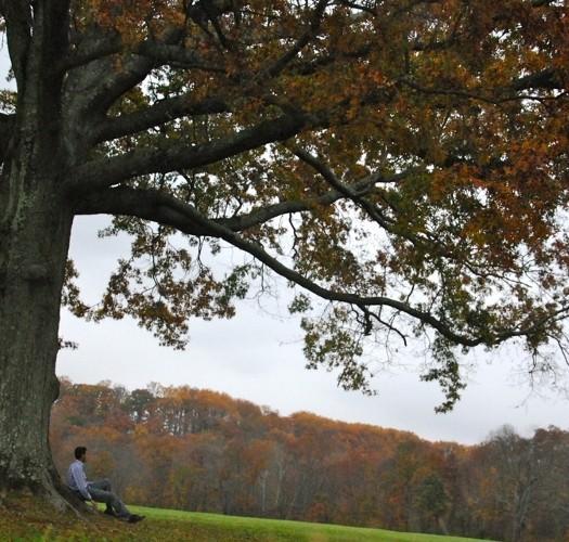 I 5 libri da leggere all'ombra di un albero: lo studente fuori sede deve sognare